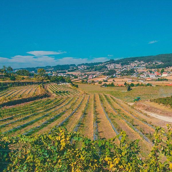campo de cultivo de mirtilo